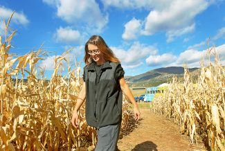 Jennifer Dunn of Silt enters the Maize Maze on Saturday. The 12th annual and final cornfield maze on the Ryden Ranch north of New Castle is open until dusk every Friday at 1 p.m. and each Saturday and Sunday at 10 a.m. The Rydens will also be hosting a Halloween party at the maze on Oct. 31, with free hamburgers, hotdogs, treats, tours and prizes. The maze is located seven miles northwest of New Castle on County Road 226.