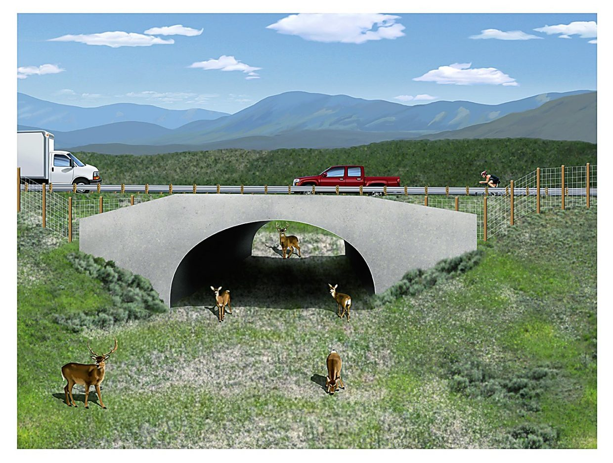 An artist's rendering of one of five wildlife underpasses that will be built during the next two years as part of CDOT's safety improvements to Colorado Highway 9 from Green Mountain Reservoir north to Kremmling.