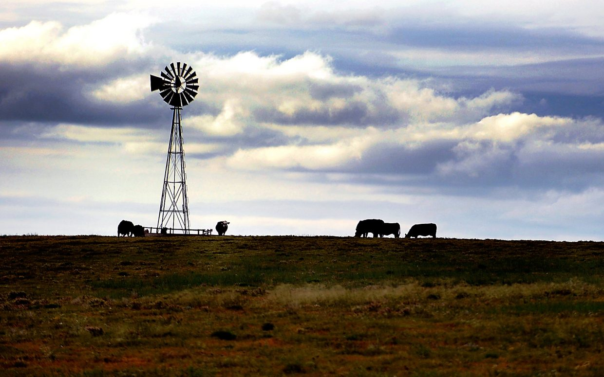A group of cattle gather around a water station while grazing inside the Pawnee National Grasslands. A new federal ruling will allow drilling in — but not on — the grasslands.