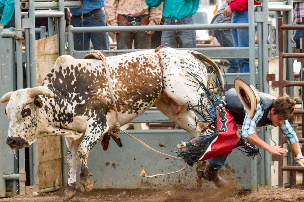 Zach Jammaron gets knocked off of the massive bull Blind Side at the Carbondale Wild West Rodeo.