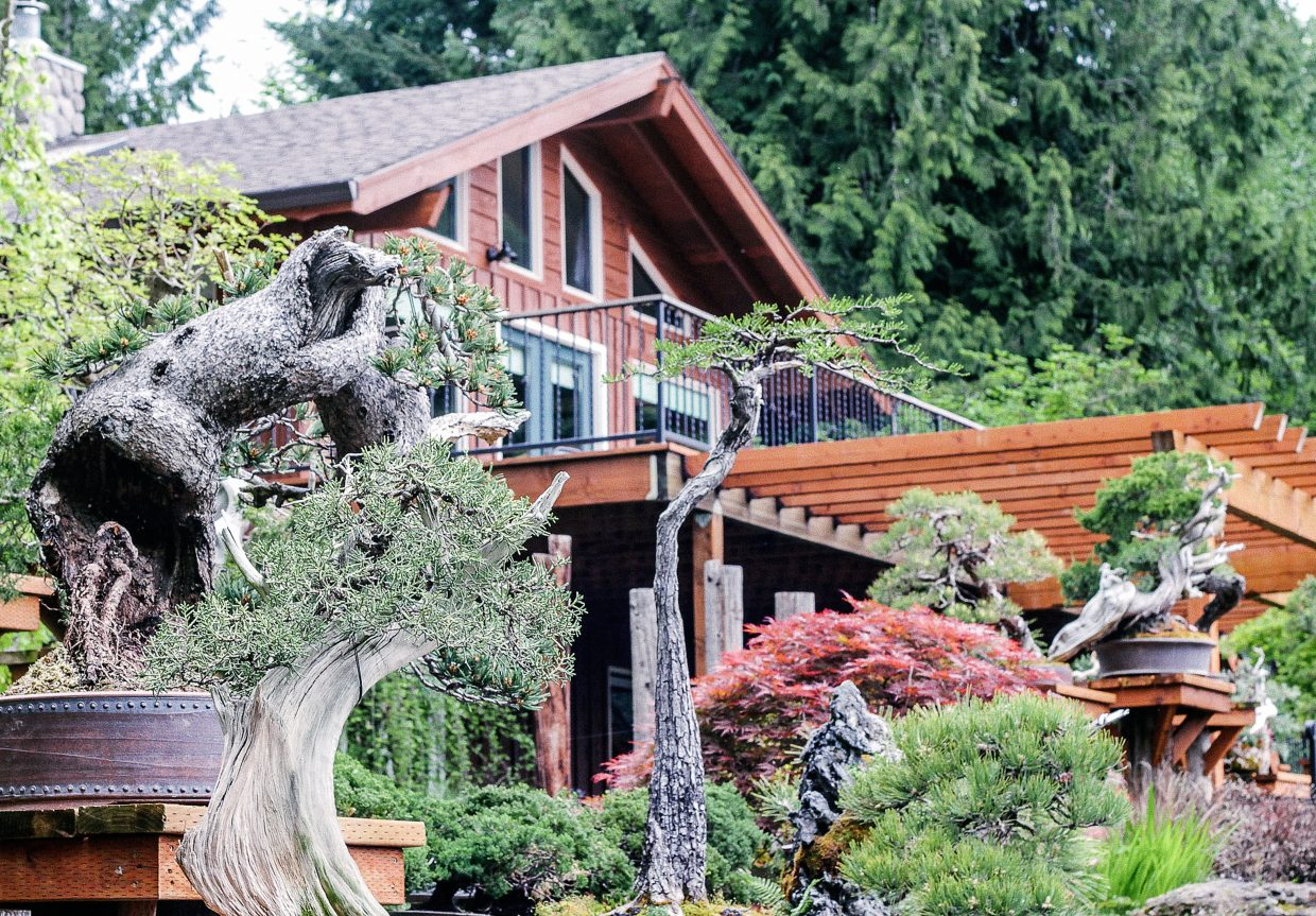 Another view of Ryan and Chelsea Neil's Bonsai Mirai garden in St. Helens, Ore.