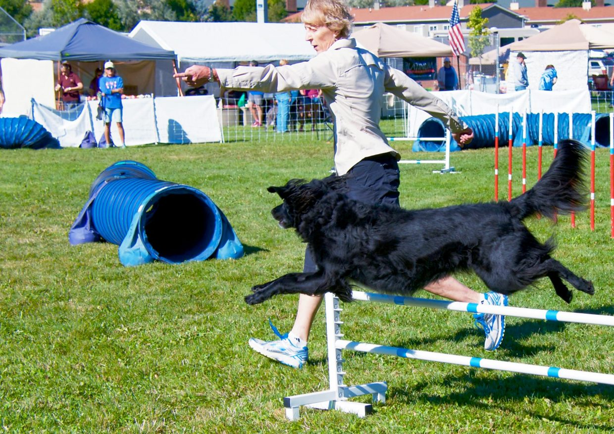 Martha Stinson guides her dog Charlie over a jump during the DOCNA national championship competition on Friday at North Face Park in Carbondale.