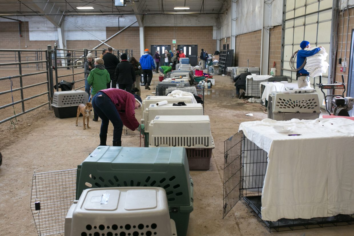 Volunteers clean kennels and take dogs for walks at the Eagle River Center on Friday. Roughly 100 dogs were temporarily left stranded in Eagle County after a truck transporting the animals slid off the road on Vail Pass.