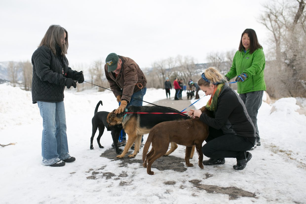 Volunteers take a few of the four-legged friends that are currently staying at Eagle Fairground's Eagle River Center for a walk on Friday.  The dogs are expected to be on their way as soon as a new vehicle is procured from Denver.