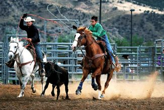 Christopher Mullen Post Independent Cody Smith and his son Tyler Smith chase down a calf during the team roping competition at the Garfield County Fair, August 4.