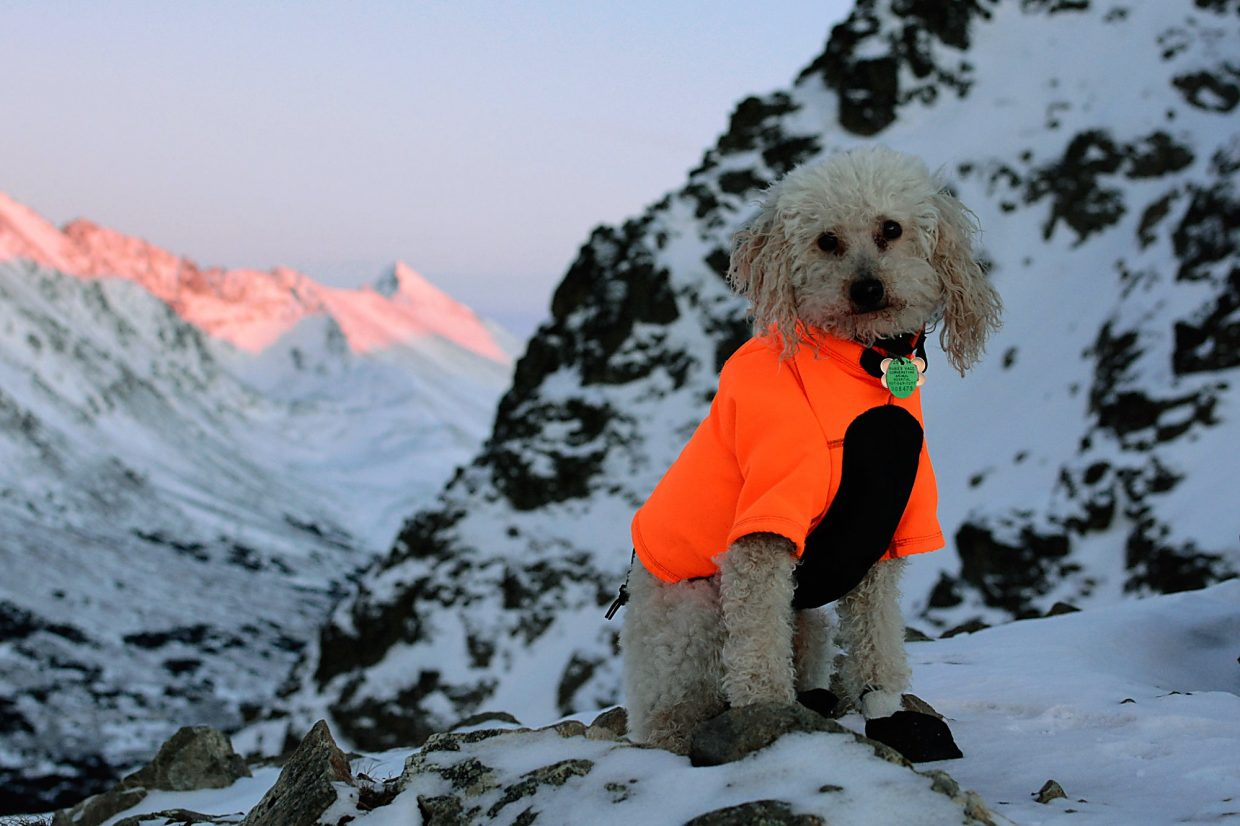 Yjorba the Adventure Poodle keeps warm and stays visible in a bright orange coat.