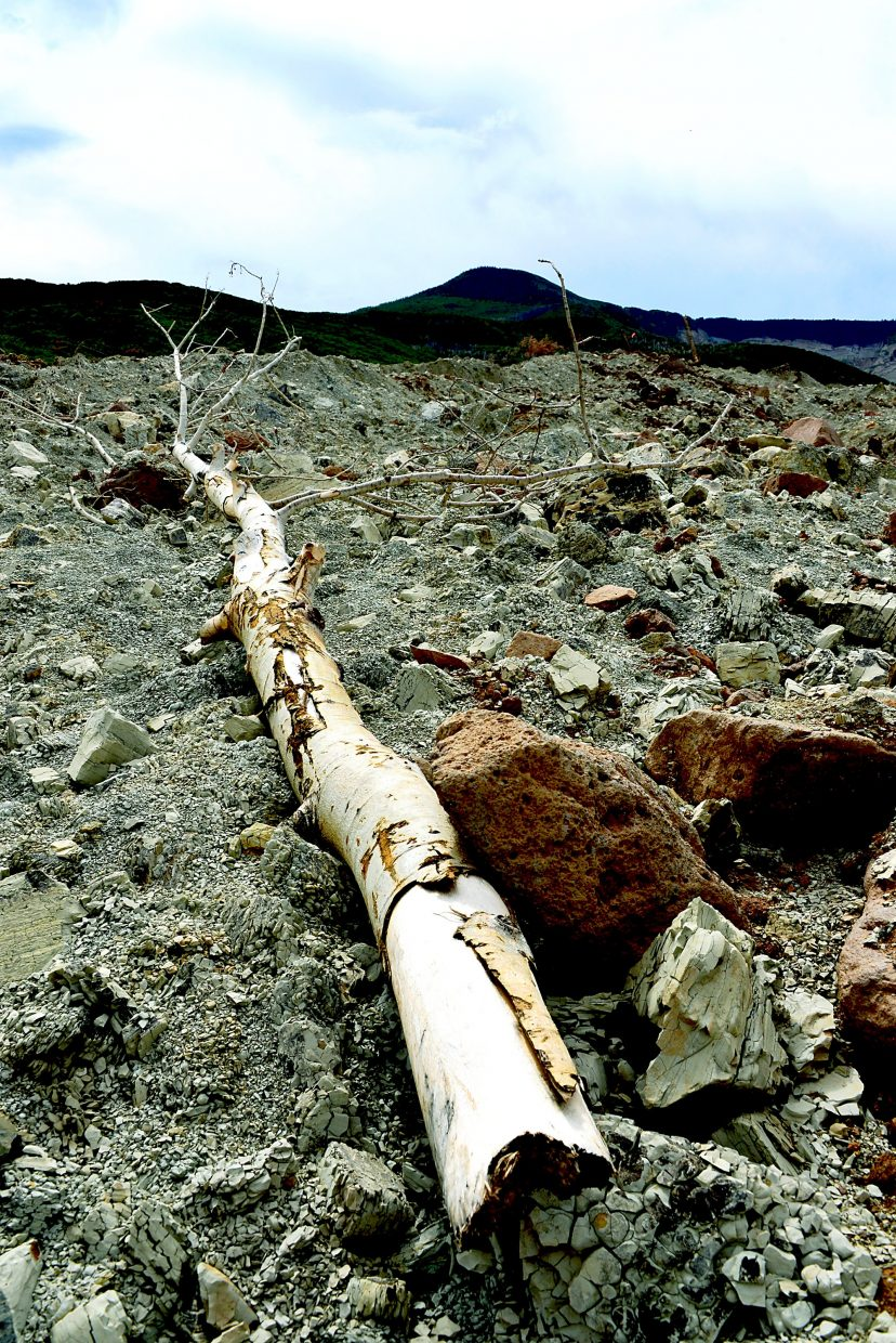A lone Aspen tree lies in the aftermath of the West Salt Creek Slide, just one of the tens of thousands of trees ripped from the earth in a mere two minutes.
