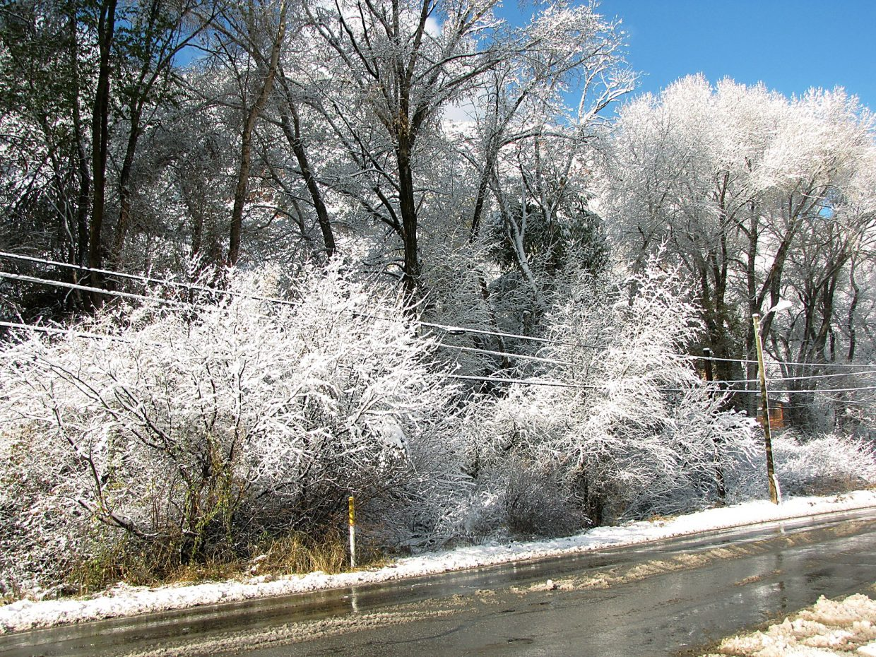 Trees and power lines along Midland Avenue in Glenwood were snow-covered Wednesday morning.