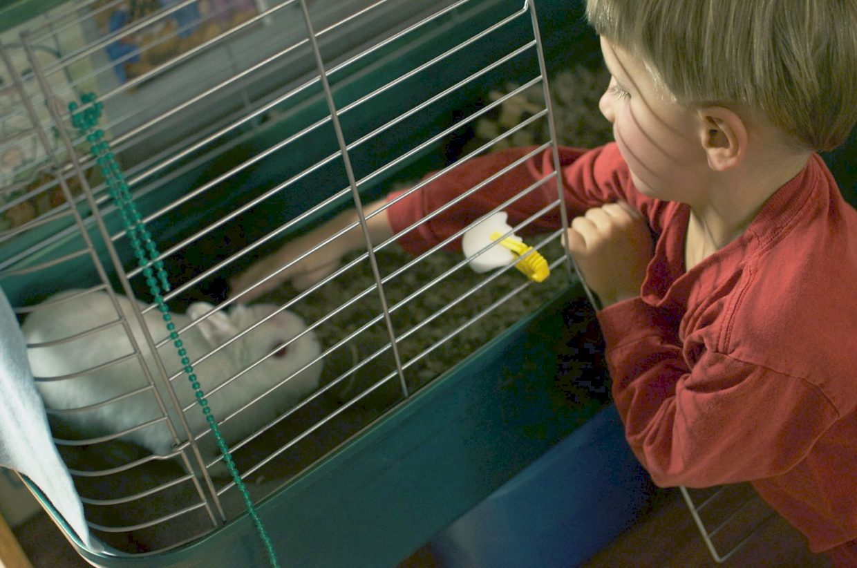 Brodie Cullen, age 3, takes care of Angel, Peppers' pet rabbit that lives at the Feed My Sheep day center.