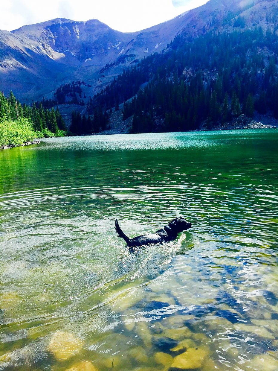 Cooper the black lab couldn't resist jumping into the lake on his hike to Thomas Lakes.