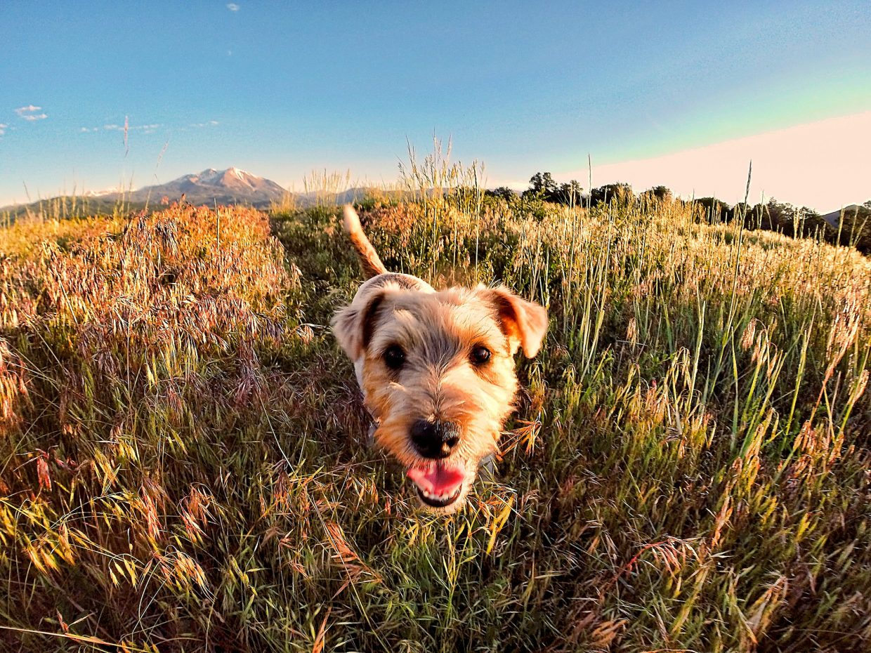 Scooter enjoying another beautiful day in Colorado.