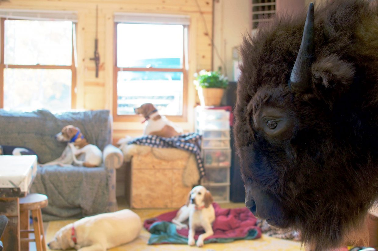 A bison waits to be mounted in the workshop of Sportsman's Barn Taxidermy Co., which is located south of New Castle. In the background, mountain lion hunting dogs relax on their beds.