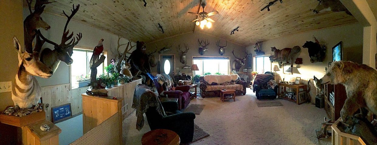 Marianne Alameno-Stanek has a vast collection of taxidermied animals in her living room. Many of the critters were killed in  Colorado, but a few are from hunts in Africa and Russia.