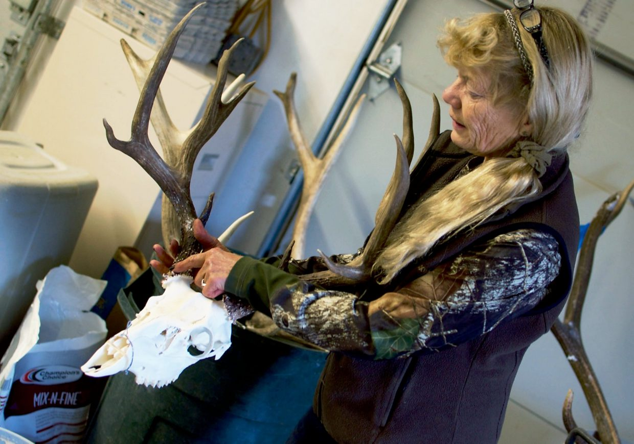 Marianne Alameno-Stanek, co-owner of Sportsman's Barn Taxidermy Co., shows an elk skull that's been bleached to a bright white.