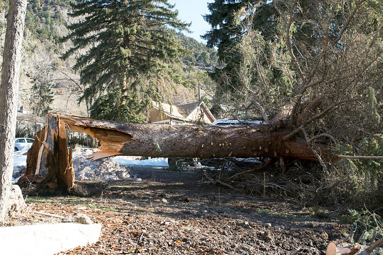 This tree in north Glenwood snapped off in high winds Thursday night and fell on a vehicle. High winds blew across Colorado on Thursday, with a 70 mph gust recorded at Telluride and Interstate 25 closed in suburban Denver when an Ikea sign was at risk of being blown down.