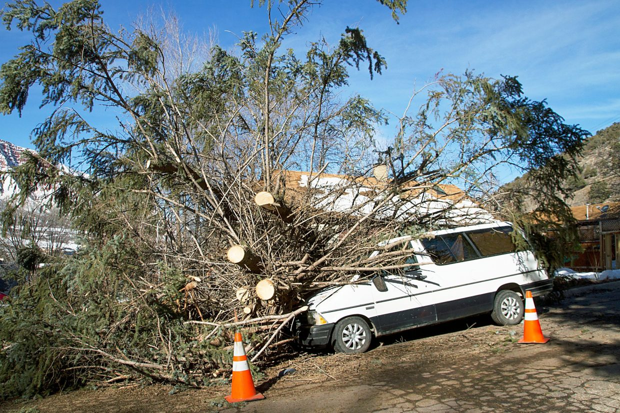 A massive conifer tree was blown down by winds Thursday night around 6 p.m. on Maple street near the Hotel Colorado in Glenwood Springs.