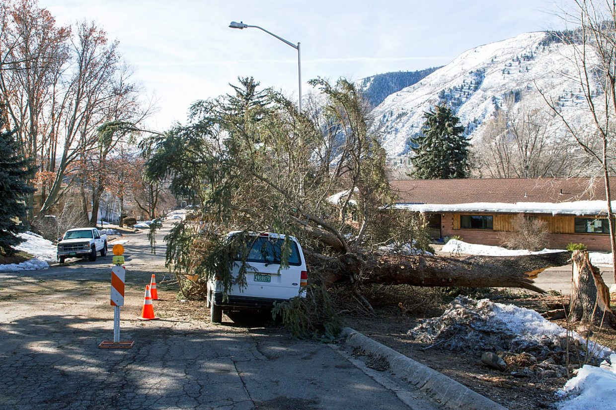 Be glad this isn't your vehicle under the tree that blew down Thursday night.