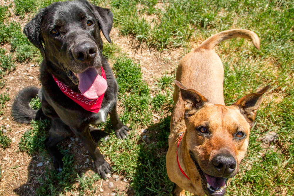 Lola (right) was recently adopted and  Rufus, who is still patiently waiting a forever home.