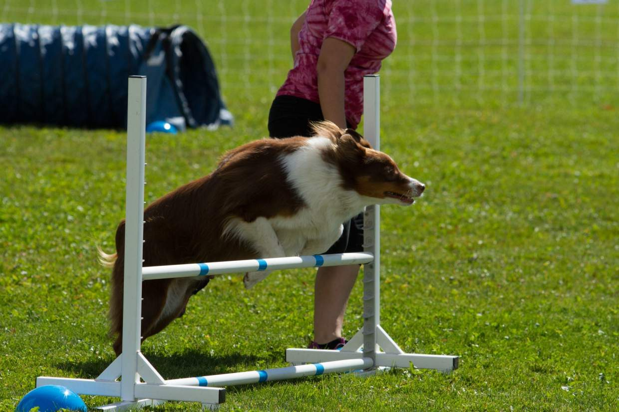 For more information on national dog agility championships go to docna.com.