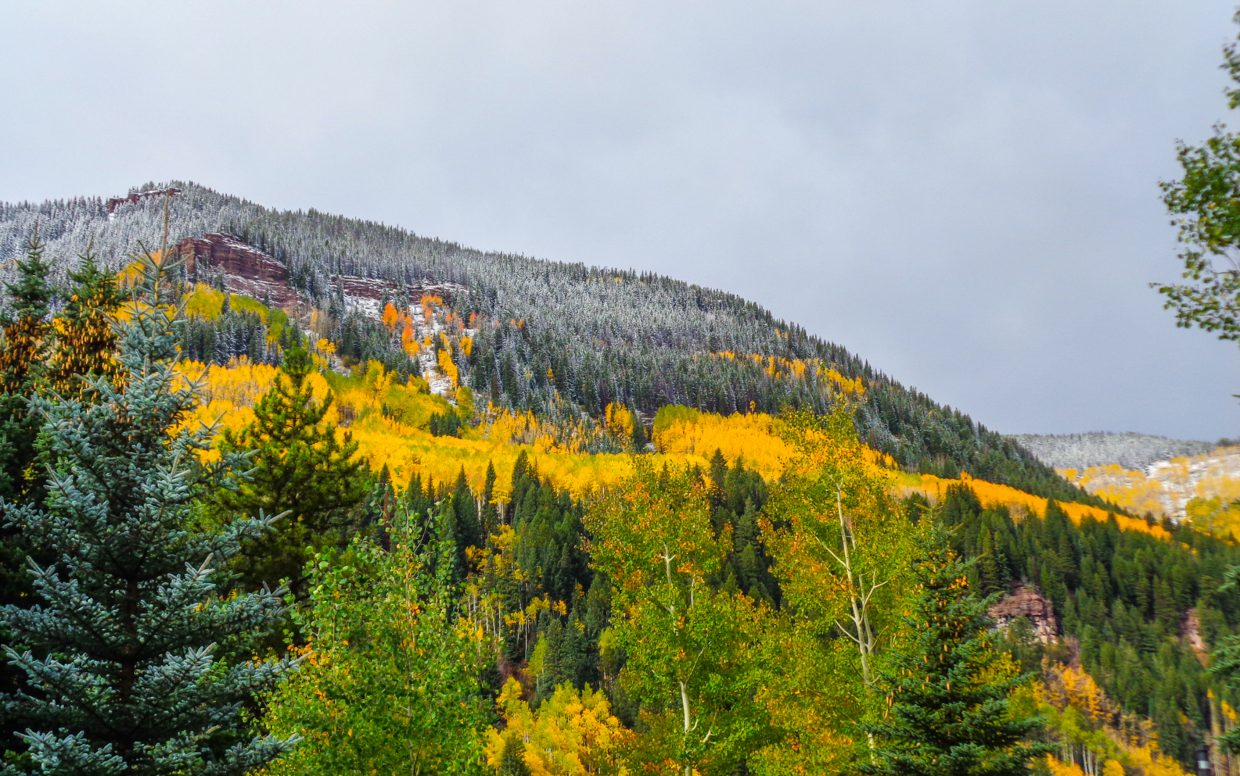 Snow frosts the furs above colored aspens during the fall of 2014 in East Vail. Fall hikes in the mountains can be different from summer hikes, from the gear to what hikers will see.