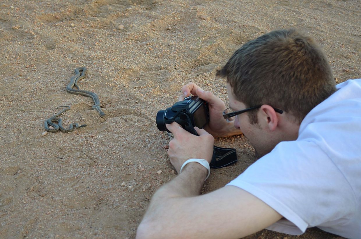 Local state park volunteer Brad Downy photographing two western terrestrial gartersnakes during a field survey in Douglas County