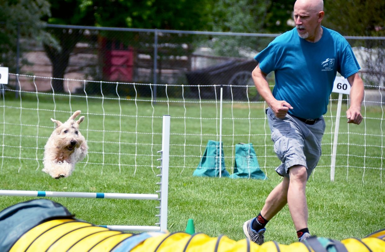 A trainer guides his dog over a hurdle in Carbondale in June.