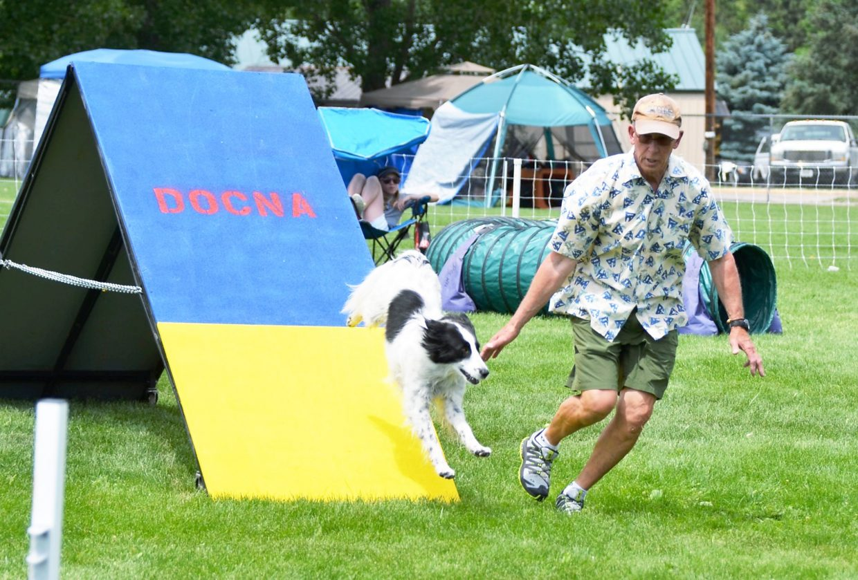 "A trainer leads his dog down the ""A-frame"" during a DOCNA statechampionship in Carbondale in June."
