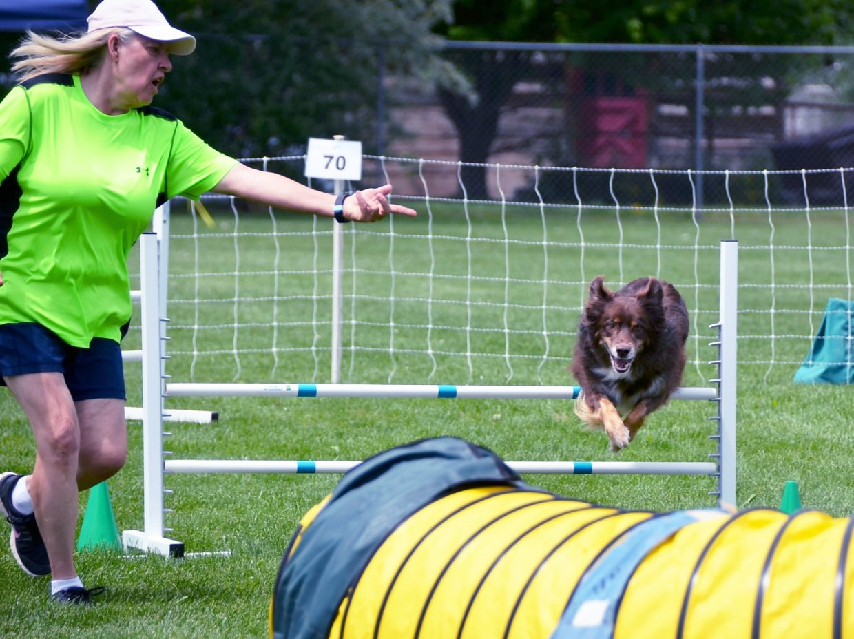 A trainer guides her dog over a hurdle in Carbondale in June.