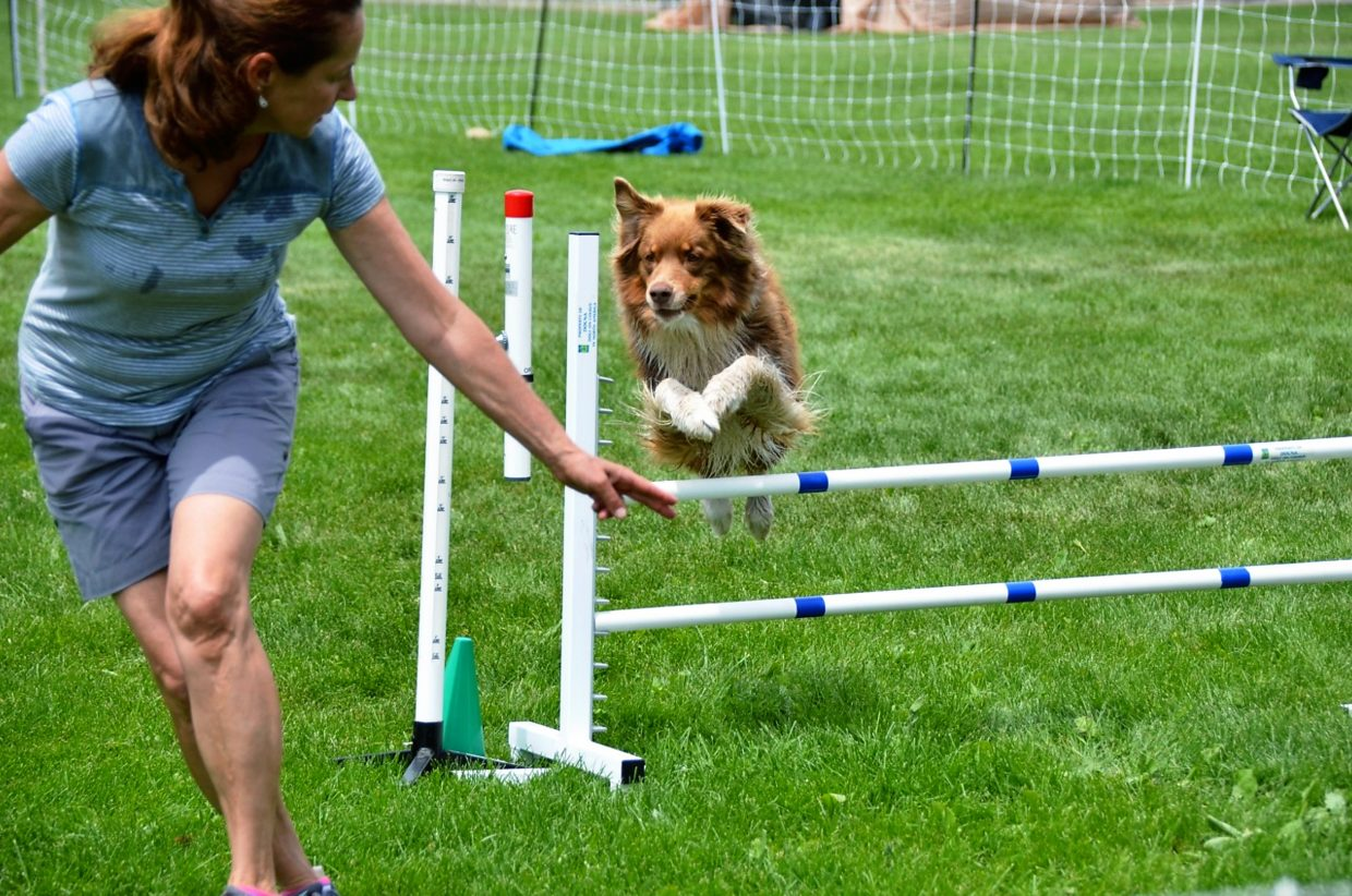 A dog handler leads her hound over a hurdle during a DOCNA state championship in Carbondale in June.