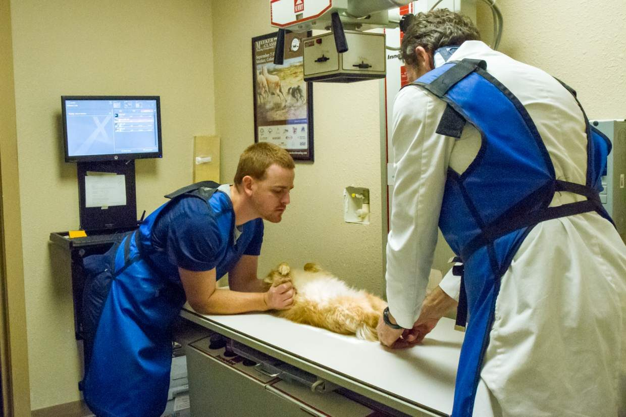 Vet technician Matthew Kells, left, and veterinarian Bob Thorsen take an X-ray of a small dog that came in with a limp.