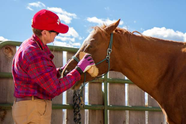 Volunteer Maureen Kerr grooming Freddy before his session with a client at WindWalkers Therapy Center.