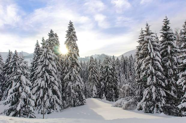 Getty Images/iStockphoto | iStockphoto. Christmas tree permits are now  available at White ... - White River National Forest Christmas Tree Permits Now Available