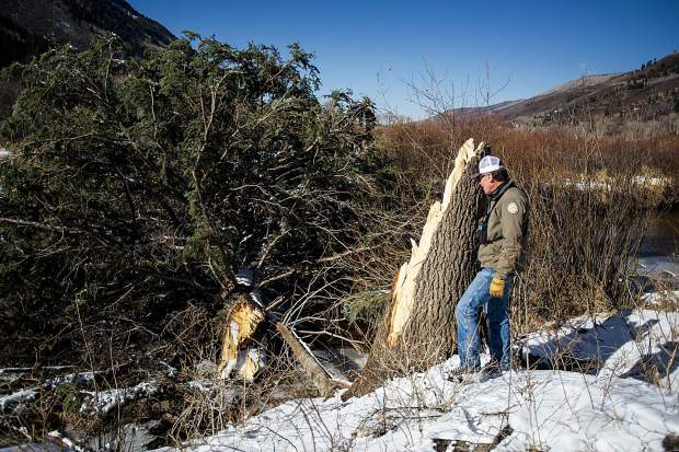 John Armstrong, Pitkin County Open Space and Trails senior ranger, next to the split of approximately an 80-foot-tall fallen spruce tree across the Roaring Fork River in the North Star Nature Preserve on Friday.