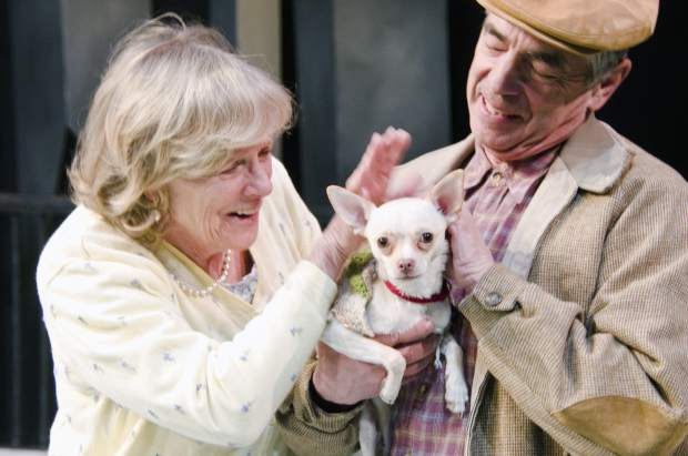 Charlie the chihuahua — an adoptable pet through CARE – with her costars from