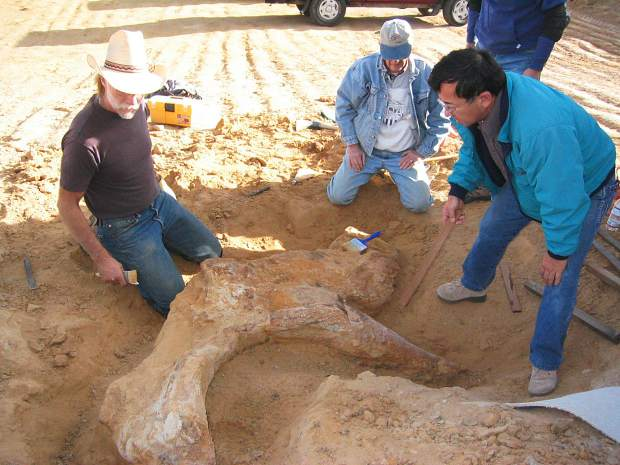 Triceratops skull EPV.48617 was excavated near Brighton on a construction site owned by Lennar Corp. Discovered by DMNS volunteer Bruce Young with fieldwork led by Ken Carpenter.