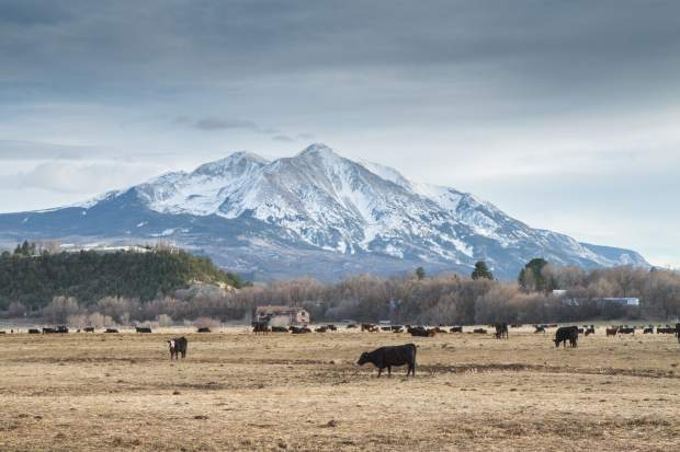 The Nieslaniks have ranched in the Roaring Fork Valley for many years.
