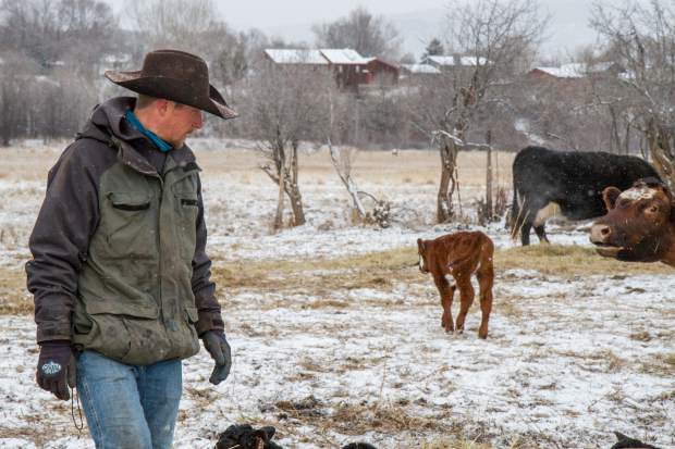 Parker Nieslanik checks on the herd on a cold morning.