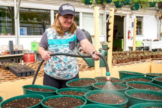 Tracy Garrison checks and waters the temporary pots at the greenhouse.