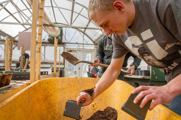 Dawson Wisdom fills the cups with potting soil before planting new seeds by hand.