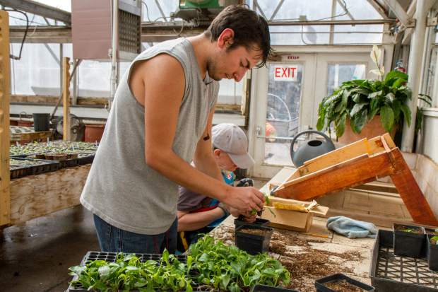 Ricky Herrera fills individual cups with soil and new seeds at the greenhouse.