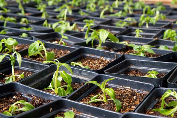 Mountain Valley employs 19 individuals at the greenhouse alone and are open to the public Monday through Friday 9 a.m. to 5 p.m. They will begin their bedding plant sale in May. For more information about the greenhouse, go to mtnvalley.org.