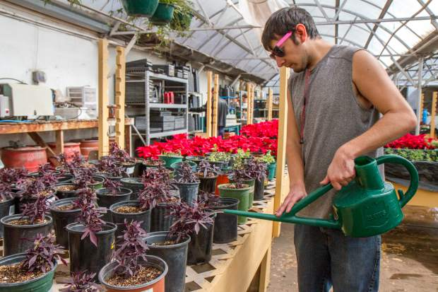 Ricky Herrera waters and fertilizes the flowers and plants at the greenhouse.