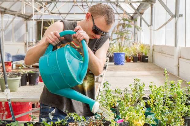 Dawson Wisdom waters and fertilizes the plants and flowers at the greenhouse.