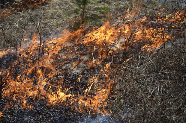 Low flames spread through the grass in a prescribed burn in Avalanche Creek Friday.