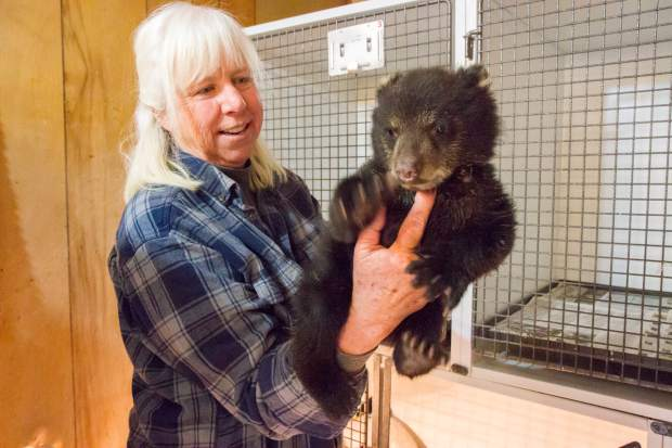 Pauline S. Schneegas Wildlife Foundation founder and executive director Nanci Limbach with a young bear cub that was found on the side of the road. The bear will eventually be released back into the wild once healthy and old enough.