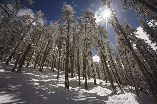 The sun beams through on North Peak's glades at Keystone Resort late last month. Combined with the deaths at Breckenridge Ski Resort, Vail Resorts' other Summit property, the two total 74 percent of the county's deaths over the past 10 seasons.