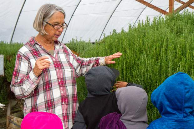 Co-founder Sarah Rumery speaks to a group of kindergartners from Kathryn Senor Elementary School during a farm tour.