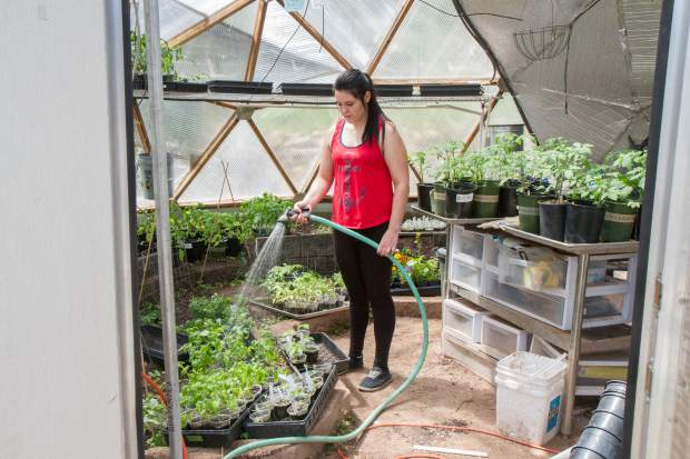 Myia Menciemer waters the tomato plants inside the greenhouse on the Yampah High School campus.