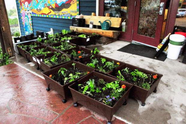 Students in Yampah's gardening program recently built and sold themed porch gardens for Mother's Day.