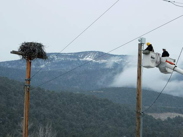 Holy Cross Energy workers install a video camera on a power pole next to a pole with an osprey nest. The camera will go live when the osprey migrate back next spring.